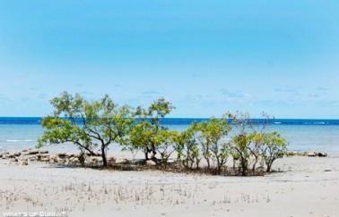 호주에서 만난 낙원, 케언즈의 케이프 트리뷰레이션 비치