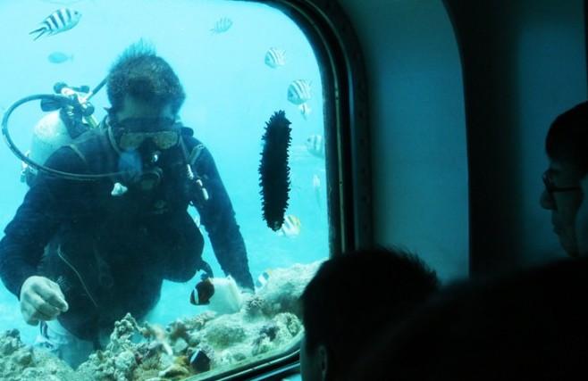 괌 가족여행, 하이라이트는 어디? 돌핀 워칭 투어!
