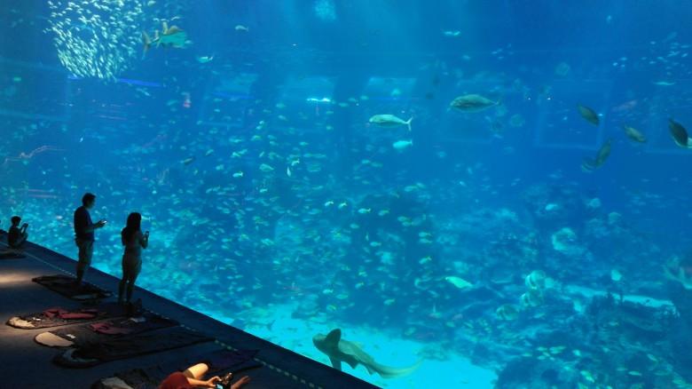 수족관에서 하룻밤을 잔다? 씨 아쿠아리움(SEA Aquarium)