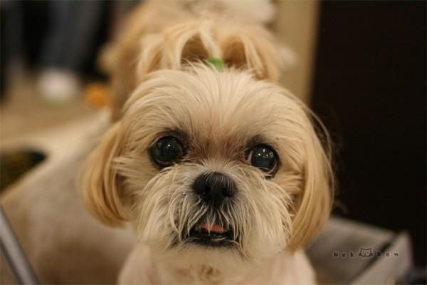 강아지와 함께 쇼핑! 일본의 IKEA '니토리' 오다이바점