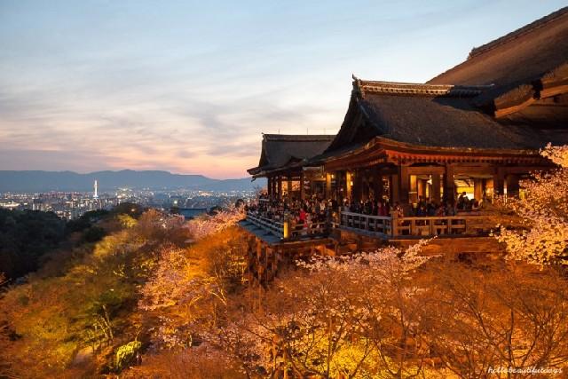 일본 교토 기요미즈데라 라이트업 야경 특별관람