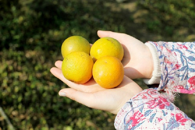 타이완 타이중, 오렌지향 가득한 힐링 여행