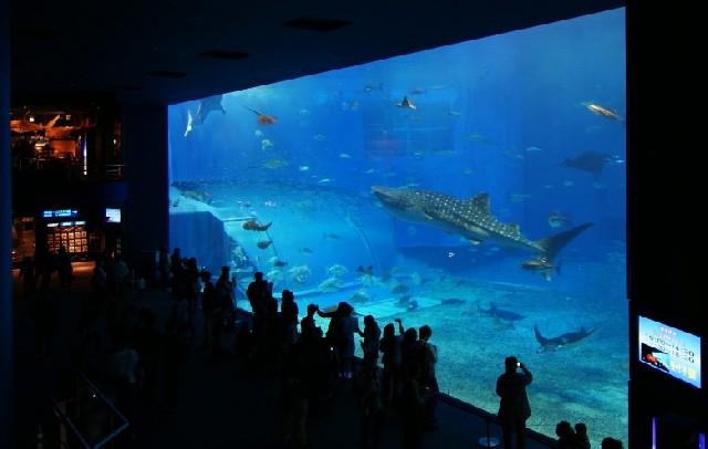 바다 왕국 완벽 재현! 오키나와 츄라우미 수족관