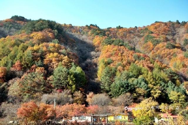 홍천의 문암마을, 숲에서 가을에 물들다
