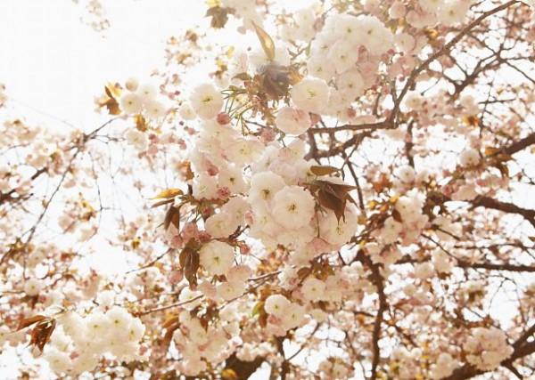 봄을 품은 꽃 대궐, 서산 개심사