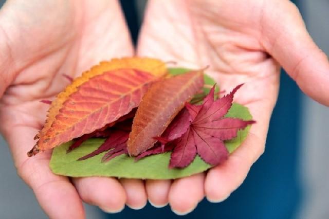곤지암 수목원의 가을, 단풍은 모노레일을 타고!
