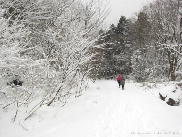제주도 사려니 숲의 겨울동화