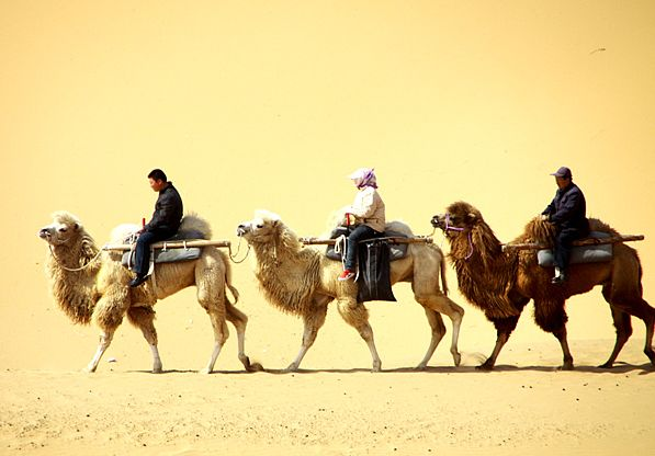 중국 은천, 사막을 여행하는 법!