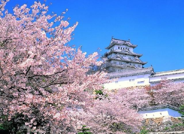 일본으로 떠나는 꽃구경, 언제가 좋을까?