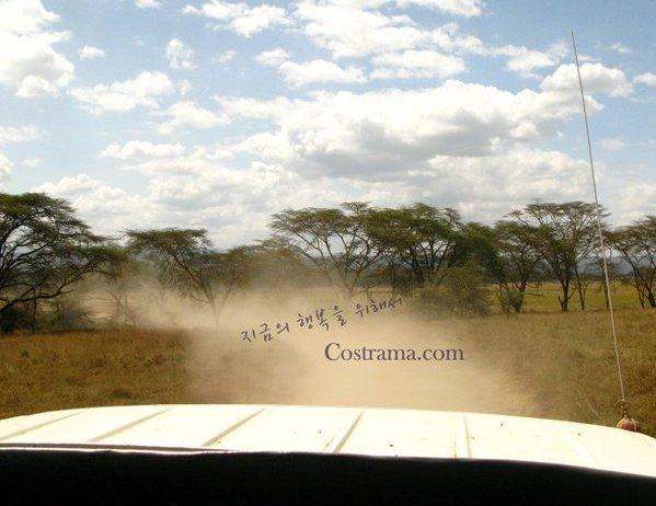 아프리카 케냐로 허니문을 떠난다면?