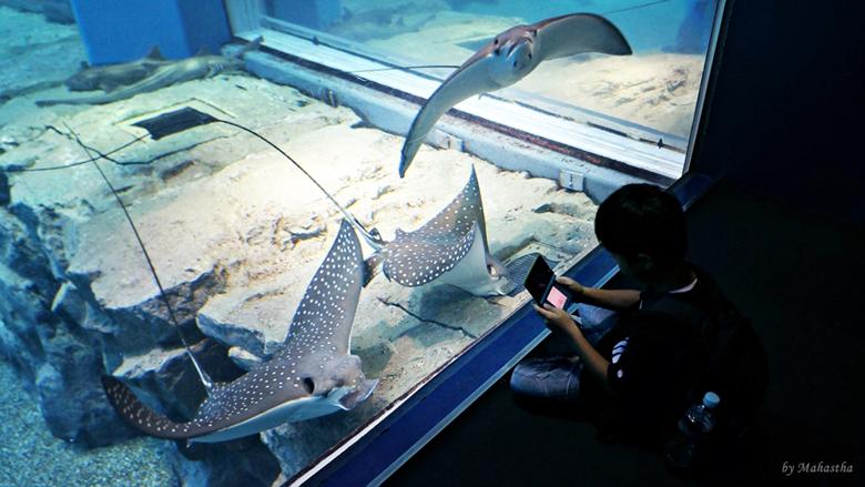 바다의 신비! 오사카 가이유칸에서 해저탐험을