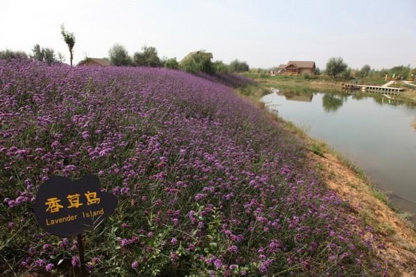 다양한 풍경, 중국 은천의 영하회족자치구!