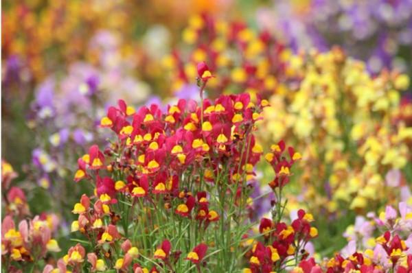 꽃의 향기에 취해버린 아침고요수목원