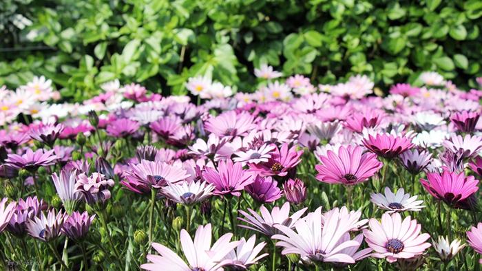 남산은 지금 꽃의 천국! 벚꽃놀이 떠나다.