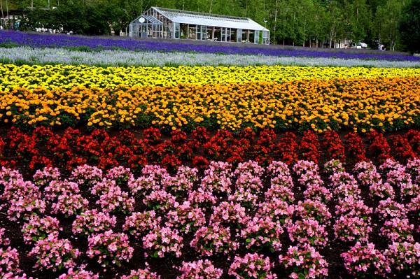꽃내음 가득한 북해도 여행! 팜 도미타의 매력