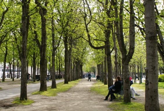 봄을 향해 손짓하는 파리의 산책로