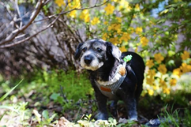 항동 기찻길, 사람도 강아지도 행복한 산책