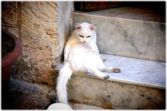 지중해의 고양이 마을, 몰타!