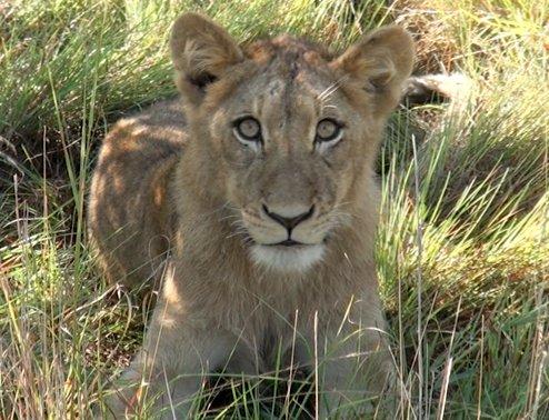 야생의 세계, 남아공 크루거 국립공원!
