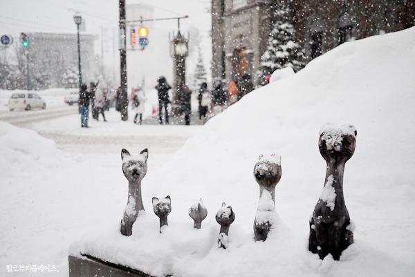 설국, 홋카이도로 떠나는 겨울여행!