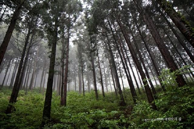 안양산 자연휴양림에서 사랑으로 힐링하다
