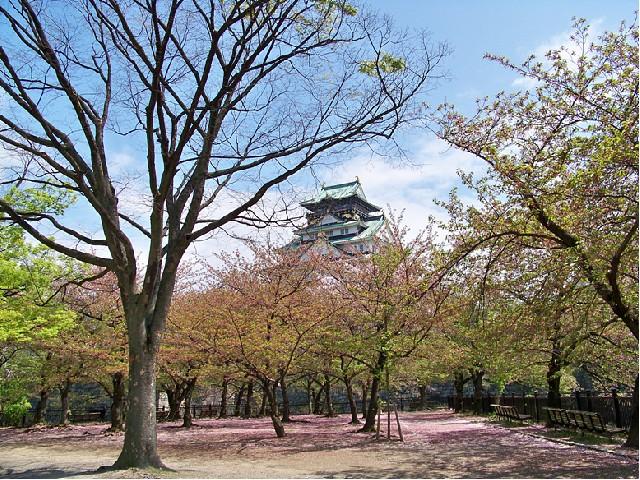 백제인의 후예가 만든 기업 곤고구미의 오사카성과 시텐노지