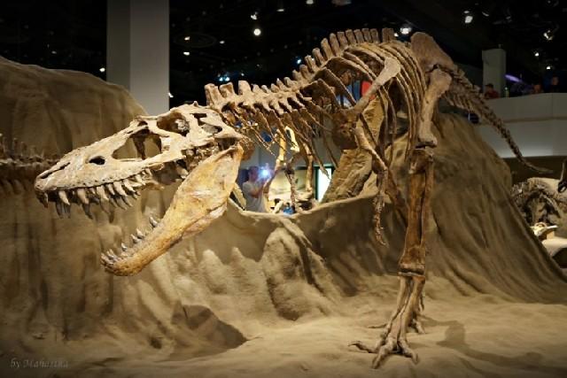세계 최고의 공룡박물관, 로열티렐 박물관