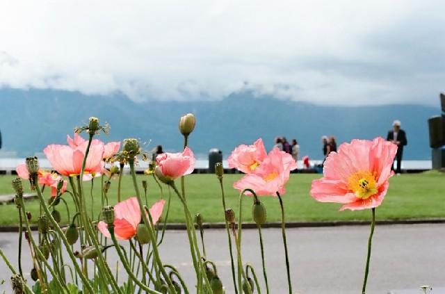 스위스 사랑의 도시, 몽트뢰 그리고 브베