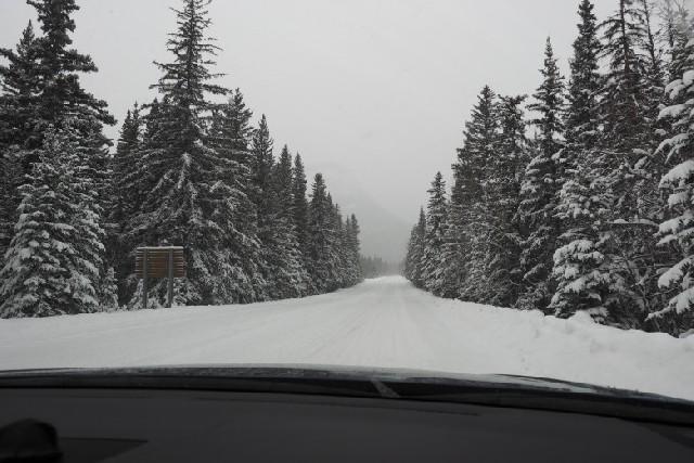캐나다 로키 - 겨울 눈길 운전에 도전하다!