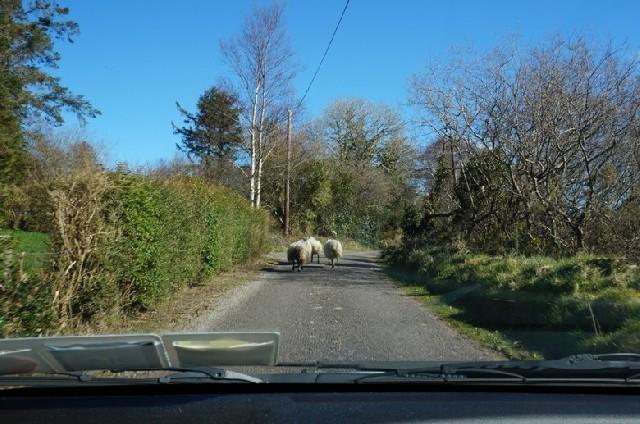 아일랜드 렌터카 여행자들을 위한 꿀팁!