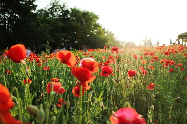 꽃 따라 떠나는 아름다운 국내여행지