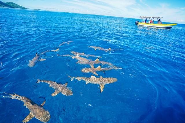 타히티 보라보라섬, 지상 최고의 낙원에서 즐길 수 있는 것들