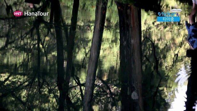 [대만] 타이중 아리산 삼림욕