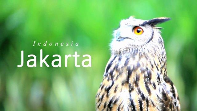 [인도네시아] 자카르타 를 소개합니다.