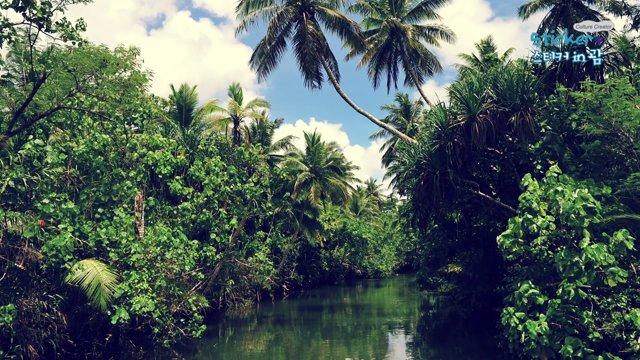 [괌] 정글 사이를 탐험하는 정글액션 크루즈