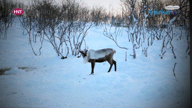 [노르웨이] 키르키네스에서 즐기는 특별한 북극체험