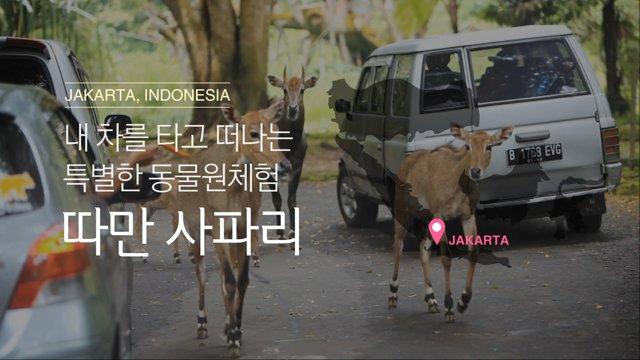 [인도네시아] 자카르타 따만 사파리