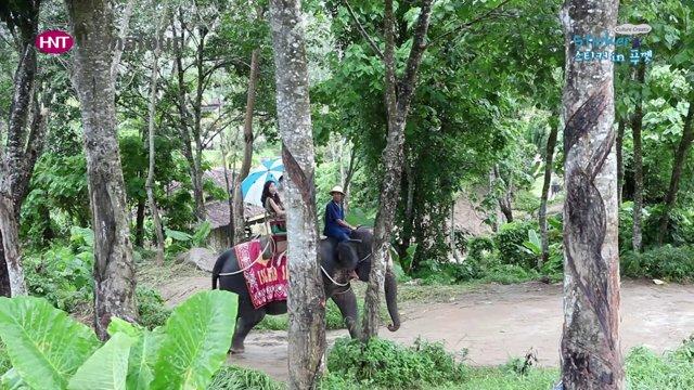 [태국] 자연, 문화를 체험할 수 있는 사파리 투어